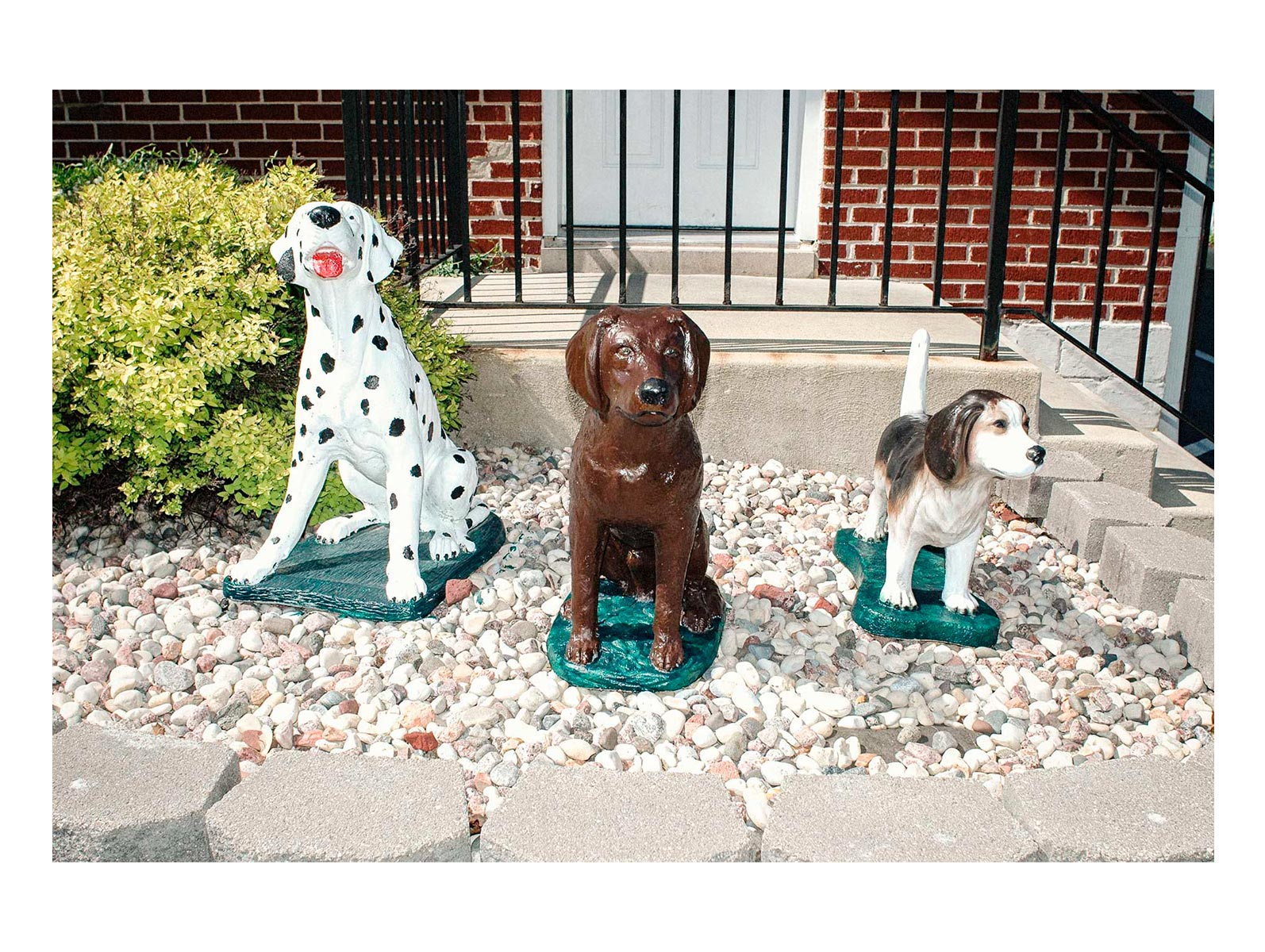 brian-sorg-dogs-9521